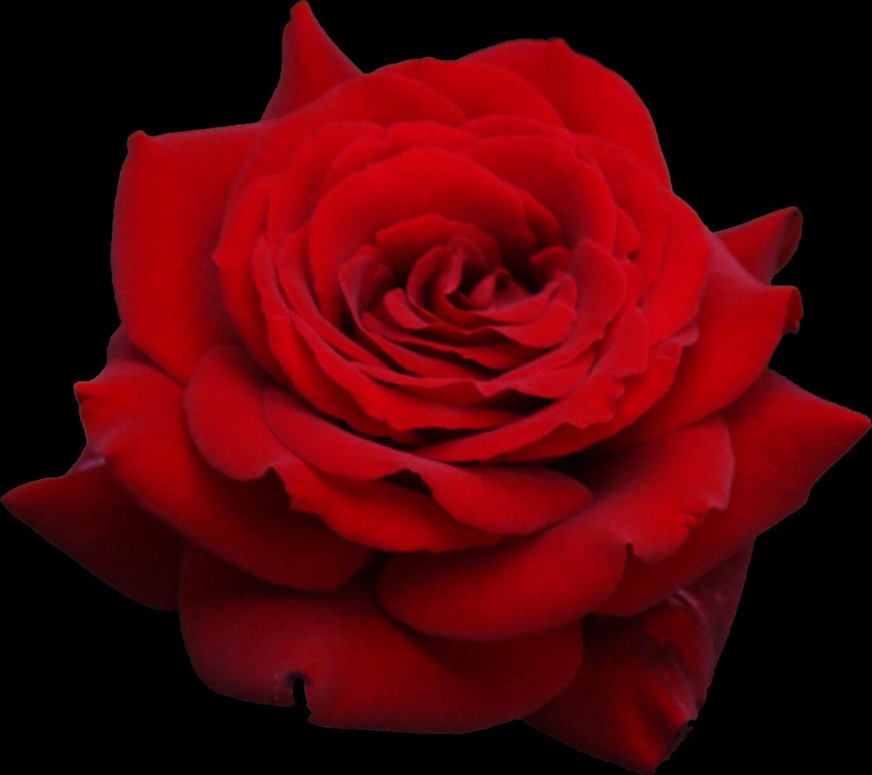 U00bb Flowers