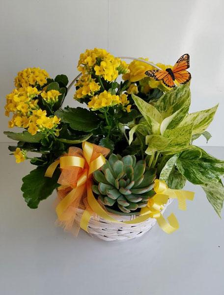 Mom's Favourite Plant
