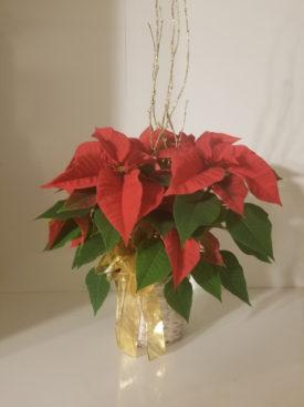 Small Christmas Poinsettia